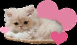 cute kitten | happy valentines day